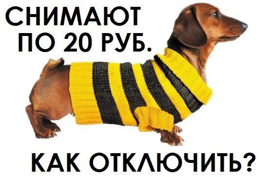За что ежедневно снимают деньги на Билайне в размере 20 рублей